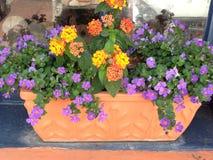 Blumiger Blumenkasten Stockfoto