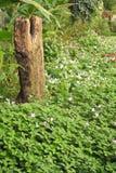 Blumiger Garten der Auslegung Stockfoto