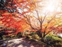 Blur Abstract Autumn background Stock Photo