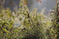 Blur autumn grass nature background with spiderweb Royalty Free Stock Photos