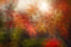 Free Blur Autumn Leaves Background. Royalty Free Stock Photo - 123785115