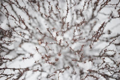 Blur background barberry twigs Royalty Free Stock Photos