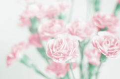 Blur background : Beautiful Pink Flower with place for text Stock Image