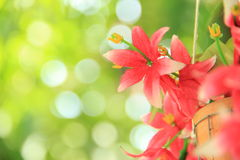 Blur Background Bokeh. And Flowers Royalty Free Stock Photography