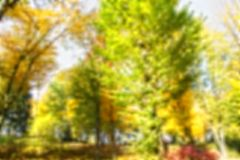 Blur background coloured forest, autumn concept,copy space royalty free stock photo