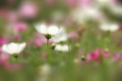 Blur background. Blur flower field background white pink green color stock photo