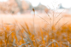 Blur background of grass in the garden Royalty Free Stock Image