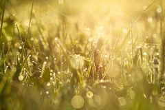 Blur background grass on  meadow Stock Photography