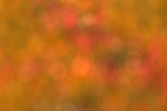 Blur background of grass Royalty Free Stock Photography