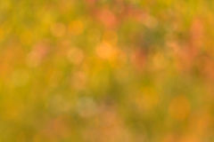 Blur background of grass Stock Images