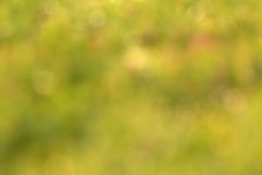 Blur background of grass Royalty Free Stock Photos
