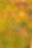 Blur background of grass Stock Photo