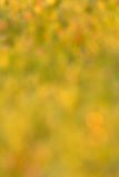 Blur background of grass Stock Image
