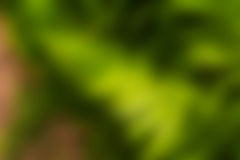 Blur background  green colour. Abstract Blur background  green colour Royalty Free Stock Images