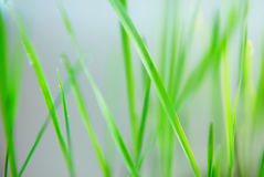 Blur background with green fresh grass Royalty Free Stock Photography