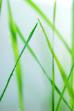 Blur background with green fresh grass Stock Photos