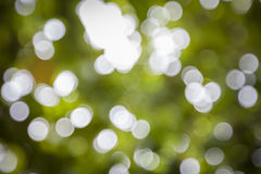 Blur Background of Green Leaves Bokeh. Royalty Free Stock Images