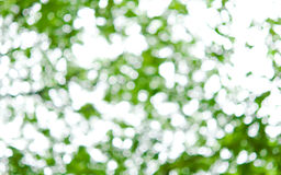 The blur background of green leaves Royalty Free Stock Photography