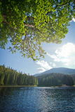 Blur background landscape with a lake and a pine branch. Karpary Stock Photography