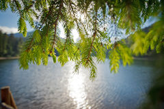 Blur background landscape with a lake and a pine branch in sunny Stock Images