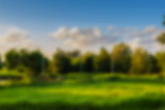 Blur background  meadow. Abstract Blur background  meadow green colour Stock Images