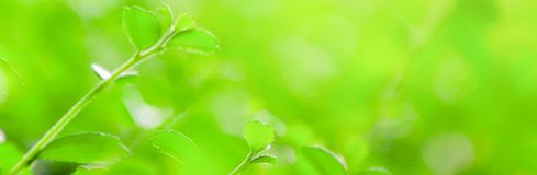 Blur background,nature leaf banner Size pattern. royalty free stock images