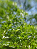 Blur background from variety of green plant leaves shallow depth of field. Under shiny sunlight and environment in nature outdoor for relax mood backdrop and Royalty Free Stock Photos