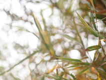 Blur background from variety of green plant leaves shallow depth of field. Under shiny sunlight and environment in nature outdoor for relax mood backdrop and Royalty Free Stock Images