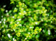 Blur background from variety of green plant leaves Royalty Free Stock Images