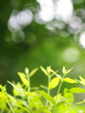 Blur background from variety of green plant leaves shallow depth of field. Under shiny sunlight and environment in nature outdoor for relax mood backdrop and Stock Photography