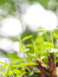 Blur background from variety of green plant leaves shallow depth of field. Under shiny sunlight and environment in nature outdoor for relax mood backdrop and Stock Photos