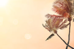 Blur beach with palm tree abstract background. Royalty Free Stock Images
