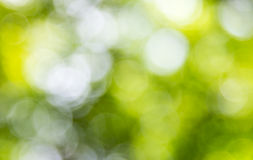 Blur blackground of the fresh leaf Royalty Free Stock Images