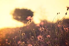 Blur, Bokeh, Bright Royalty Free Stock Image