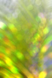 Blur, bokeh coconut leaves. Background Royalty Free Stock Images