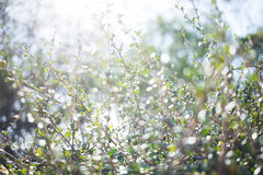 Blur bokeh green leaf with sun flare background Stock Photo