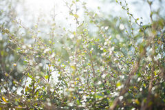 Blur bokeh green leaf with sun flare background Royalty Free Stock Images