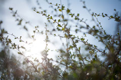Blur bokeh green leaf with sun flare background Stock Images