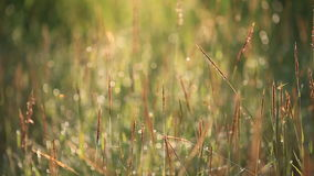 Blur and bokeh of meadow stock video