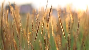Blur and bokeh of meadow stock video footage
