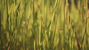 Blur and bokeh of meadow stock footage