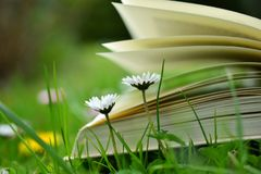 Blur, Book, Pages Royalty Free Stock Photography