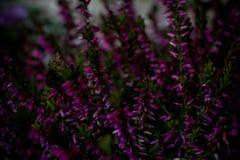 Blur, Botanical, Bunch, Close-up royalty free stock image