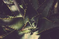 Blur, Botanical, Cactus, Close-up, Stock Images