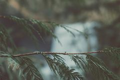 Blur, Branch, Close-up Stock Images