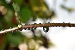Blur, Branch, Close-up Stock Photo