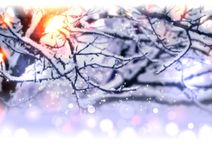 Blur branches on winter background Royalty Free Stock Photography