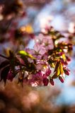 Blur, Buds, Close Royalty Free Stock Photography