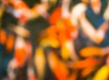 Blur carp Royalty Free Stock Image