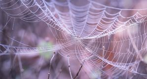Blur, Close-Up, Cobweb, Dew Royalty Free Stock Images